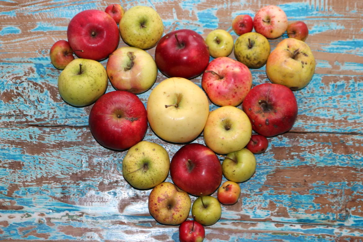Discover the rare and unusual heritage apples at Lost Orchard